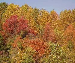 Orange and yellow trees